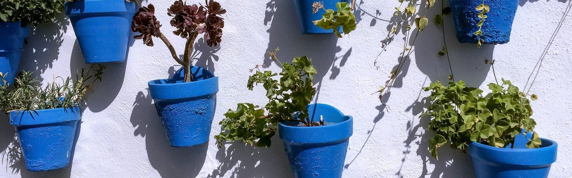 pots-1680026_1920